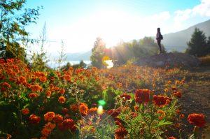 Blumenmeer Dämmerung
