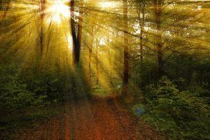 Wald Sonnenstrahlen